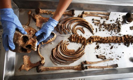 A forensic expert of the International Commission on Missing Persons (ICMP) works on trying to identify the remains of a victim of the Srebrenica massacre, at the ICMP centre near Tuzla